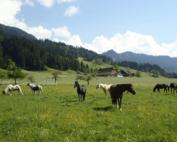 Lucerne West Enfant à cheval