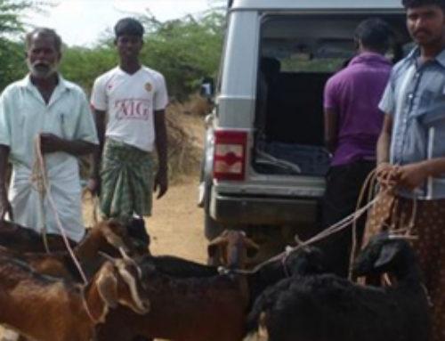 RAKhI Fondation – Vient en aide aux Irulas en Inde